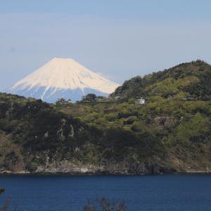 黄金崎からの富士山4月15日