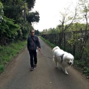 牧場経由のお散歩