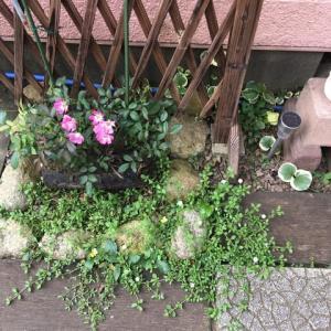 季節外れの花⁉︎
