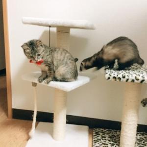 イタチと猫の共存の巻