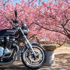 CB1100  萩の河津桜と山焼き前の秋吉台へツーリング