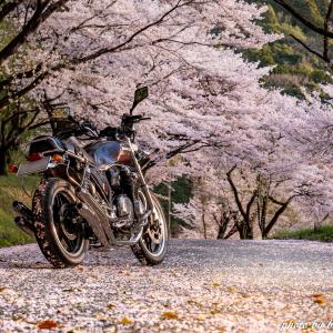CB1100  桜ツーリング 山口編 その③ 最終話