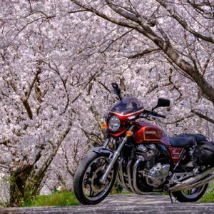 CB1100 浮羽稲荷神社と流川の桜並木  福岡お花見ツーリング その③