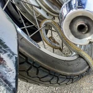 【閲覧注意】 バイクに乗る前は目視で車体の確認を!