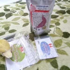 コザクラインコ:小春のお買い物