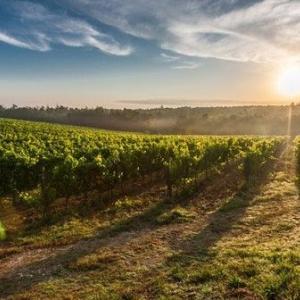 【2018/9/9追記】ツール・ド・フランスを楽しむための安旨白ワインおすすめランキング