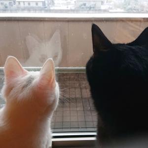 ユカイ、キラリ、初めての雪♪