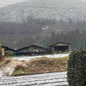 初雪になりました!