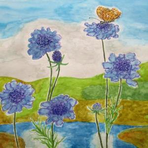 八島湿原に咲く松虫草