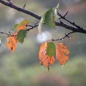 ふかまる秋
