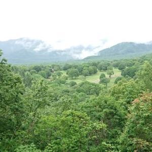 深緑の高原