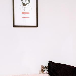猫の論理学