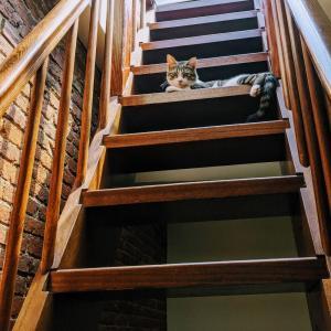 猫に優しいハウスプラント