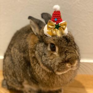 クリスマスのお帽子(うさフェス)
