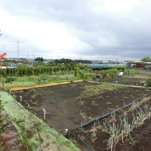 横浜市泉区 市街化調整区域の農地957m2、販売開始しました!