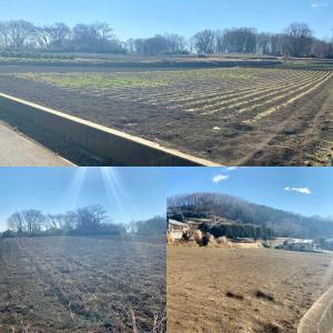 神奈川県秦野市 市街化調整区域の農地一括売却(総面積4,211m2)