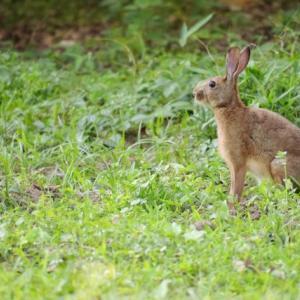 「ウサギとカメ」は「The rabbit & the turtle」ではない⁈
