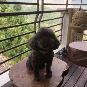 マレーシアに犬を連れてくる方法!@penang