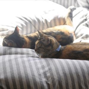 三猫、昼下がり。。