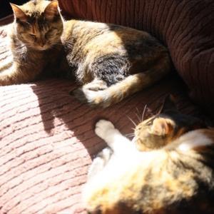 猫の世界もキビシイのです。。