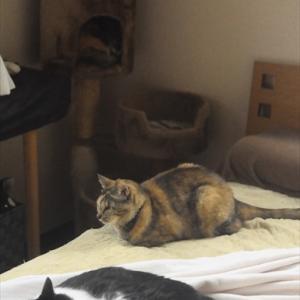 今日の三猫