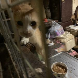 「多頭崩壊現場で10月23日には強制退去になってしまう現場に23頭の猫が取り残されている~東京都」