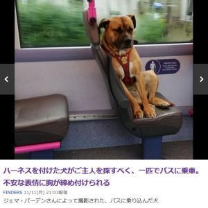 「ハーネスを付けて一人でバスに乗ってた犬~イギリス」