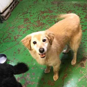 「供血犬として8年間、動物病院の地下室で生きてきたシロちゃん~東京都」