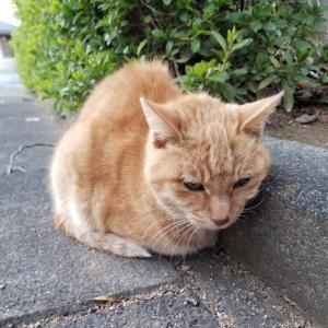 「この寒空の下、公園に棄てられた猫たち~静岡県」