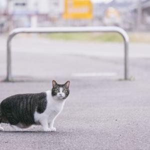 「多少の小遣い稼ぎになればいいかなと思い・・・と個人で猫を繁殖した末路?」