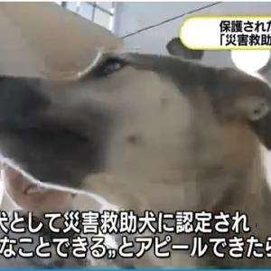 「どんな雑種だって災害救助犬になれる可能性が:保護犬一発で合格~徳島県」