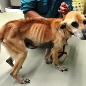 「ガリガリで皮膚病の犬が収容されています~宮崎県」