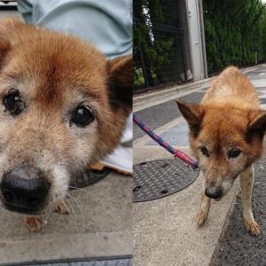 「水路に落ちていた老犬、飼い主が見つかったのに・・・・・・香川県」