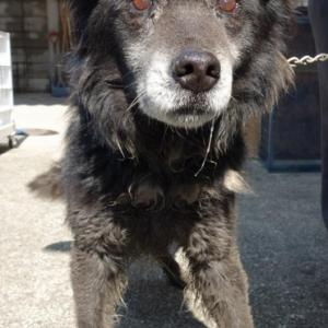 「迷子犬の飼い主さん捜しの為にポステイングのお手伝いをお願いします~香川県」