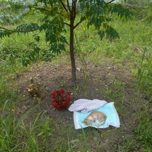 「救えなかった命、この仔(ねむの木)が生きていた証のために」