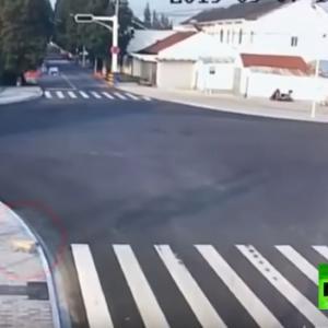 「横断歩道を無視して事故に遭う人と横断歩道手前で安全確認してから渡る犬」