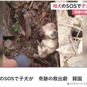 「土砂崩れで1週間以上、生き埋めになっていた子犬たちを救助!~韓国」