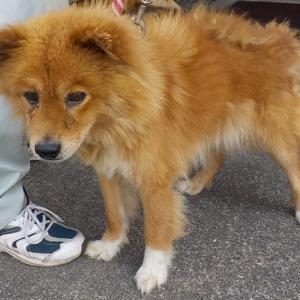 「収容されて、とても悲しそうな目をしている犬~栃木県」