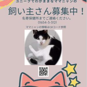 「3か月以上収容してる1頭の猫の里親募集に努力する名寄保健所~北海道」