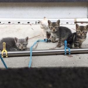 「泣いてる子猫たちを何とか助けたい~宮崎県」