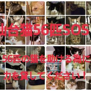 「保護主が入院、取り残された56頭の猫たち~宮城県仙台市」