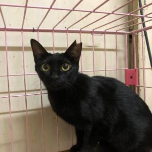 「独りぼっちで生きてきた子猫のレモン里親募集~大阪市」