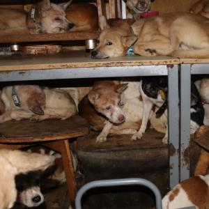 「8畳2間に犬164匹…すし詰め状態の犬たち~島根県」