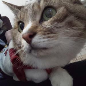 「背中に12針の大怪我をした地域猫~東京都」