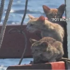 「海の上、まもなく沈没する船の上に猫が3頭いる!」
