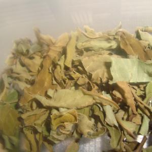 沖縄のハーブをお茶にして免疫力アップ