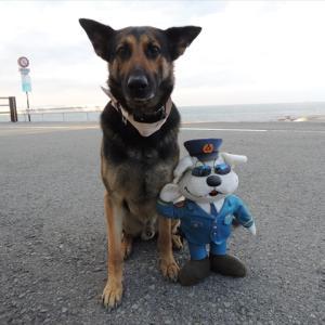 警察犬ポン助、帰ってまいりましたーっ!(`・ω・´)ゞ