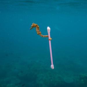 世界環境デーに考えるプラスチック問題