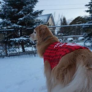 気温-6℃程の雪道を歩くと・・・