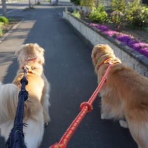 一緒にお散歩♪ でも、ふきの助も油断できないね(ーー゛)